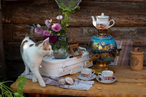 «Вкусная» кошка и ленивая бабочка. Гран-при фотоконкурса «Одежда, кухня, жилище моего народа» присуждено чесмянке Марине Овчинниковой