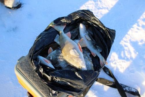 «Ловись, рыбка, большая и маленькая…» Полицейские Чесмы померились уловом